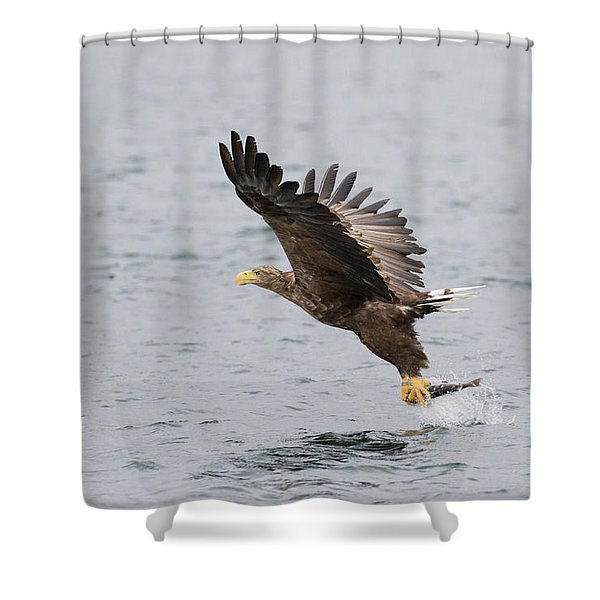 White-tailed Eagle Catching Dinner Shower Curtain