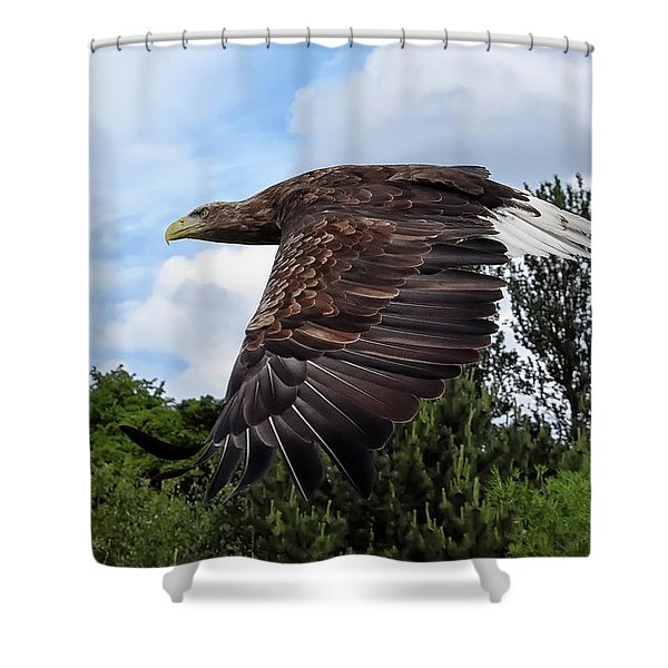 White Tailed Eagle Shower Curtain