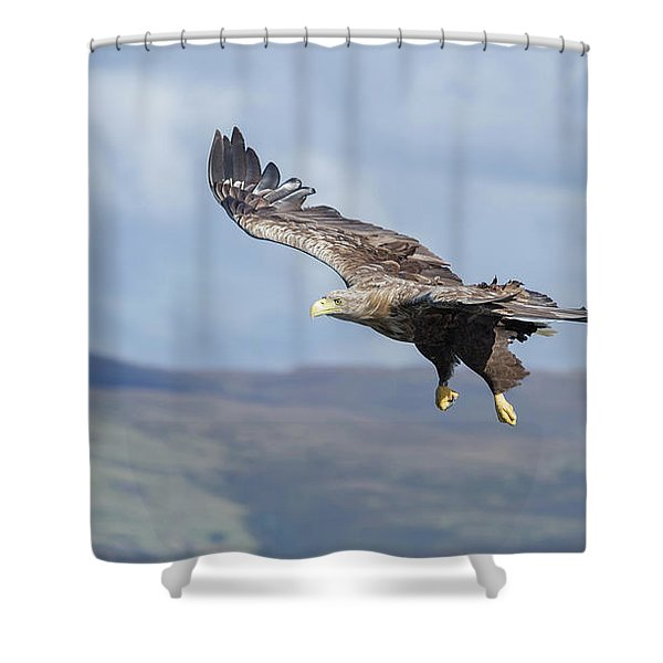 White-tailed Eagle On Mull Shower Curtain