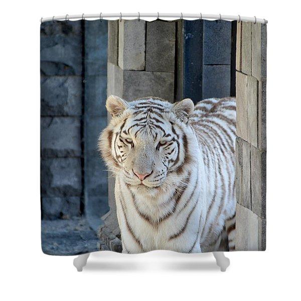 White Tiger Shower Curtain