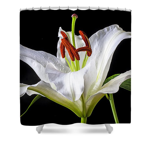 White Tiger Lily Still Life Shower Curtain