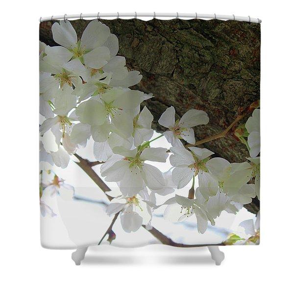 Dogwood Branch Shower Curtain