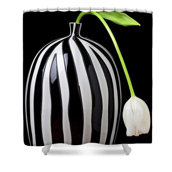White Tulip In Striped Vase Shower Curtain