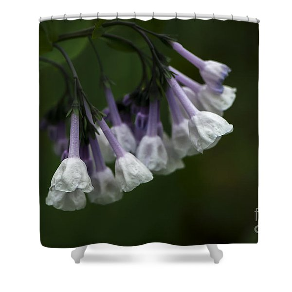 Shower Curtain featuring the photograph White Virginia Bluebells by Andrea Silies