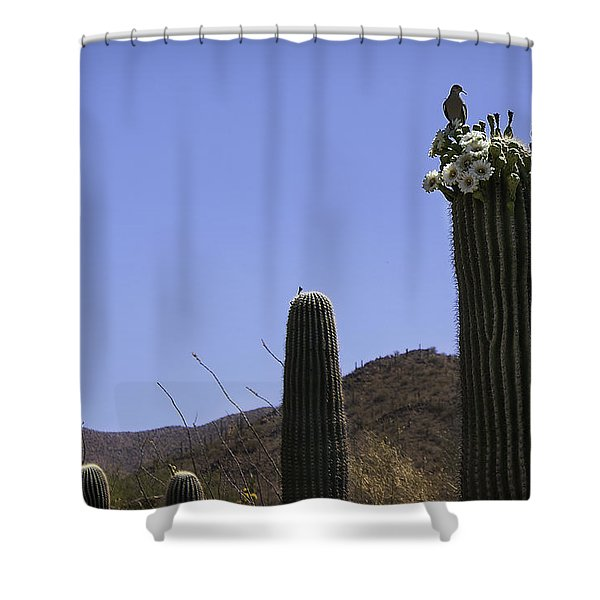 White Wing Dove Shower Curtain