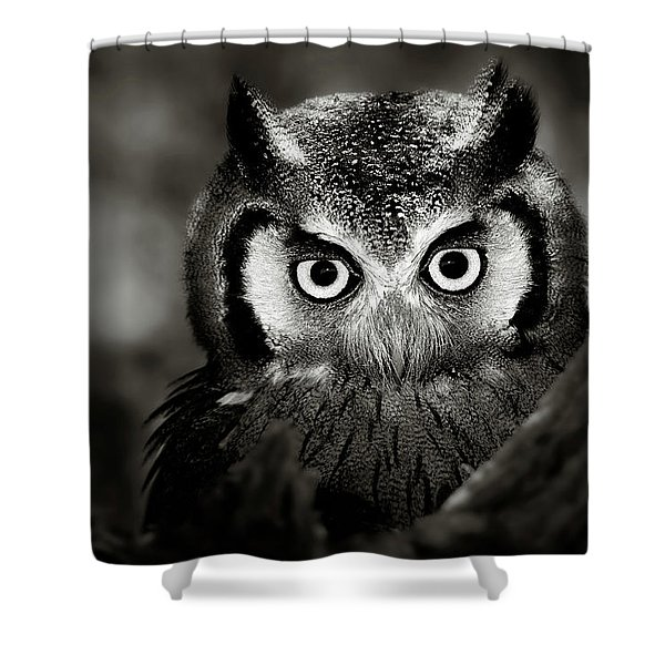 Whitefaced Owl Shower Curtain