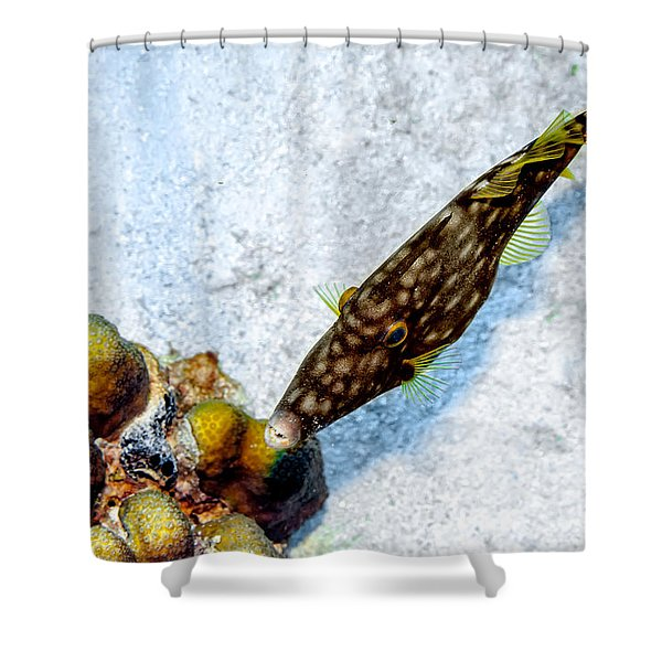 Shower Curtain featuring the photograph Whitespotted Filefish by Perla Copernik