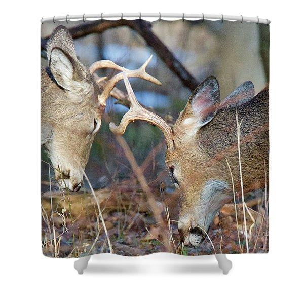 Whitetail Bucks 5754 Shower Curtain