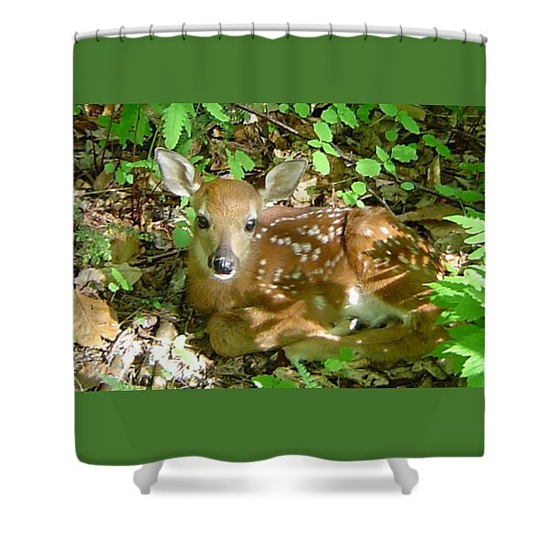 Whitetail Fawn II Shower Curtain