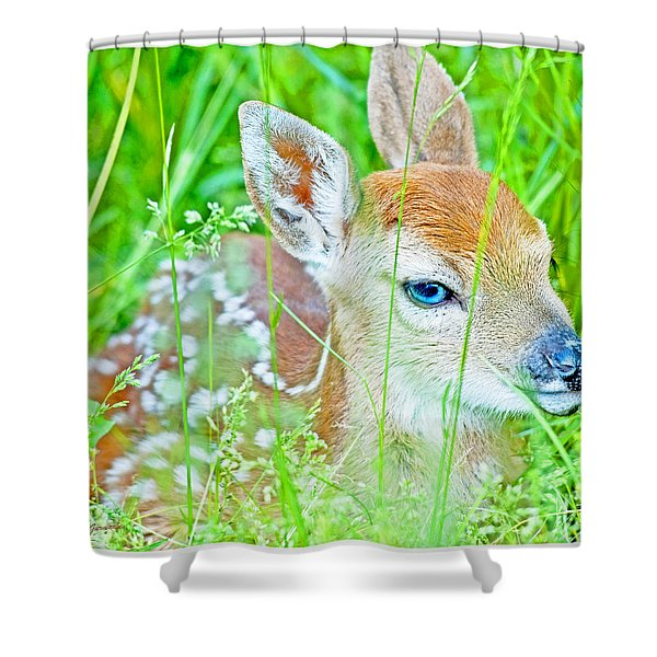 Whitetailed Deer Fawn Shower Curtain