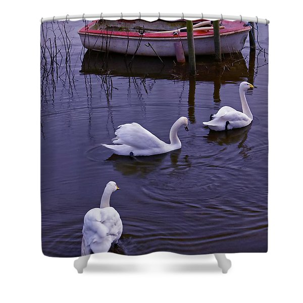 Whooper Swans On River Shower Curtain