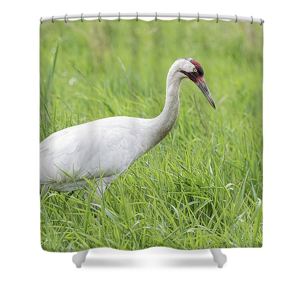 Whooping Crane 2017-3 Shower Curtain