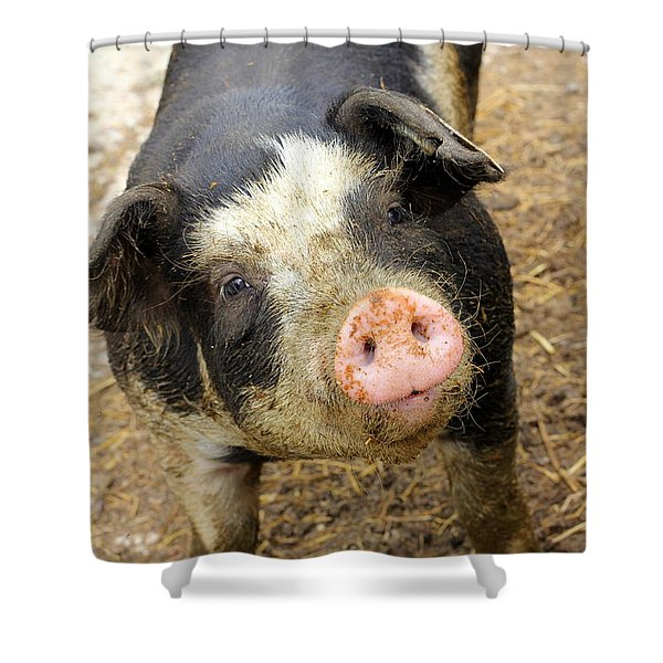 Wilbur Shower Curtain