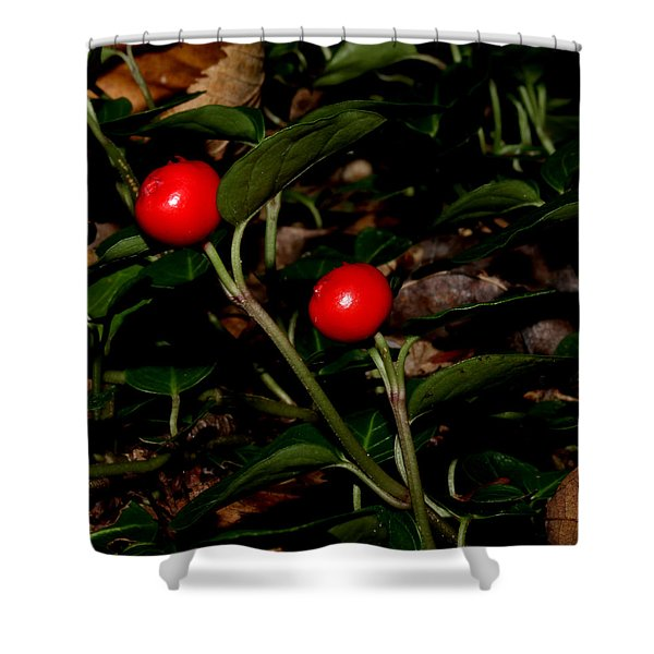 Wild Berries Shower Curtain