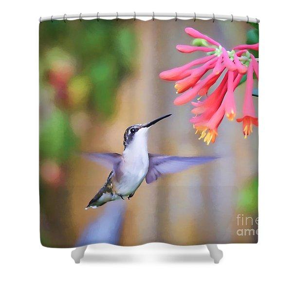Wild Birds - Hummingbird Art Shower Curtain