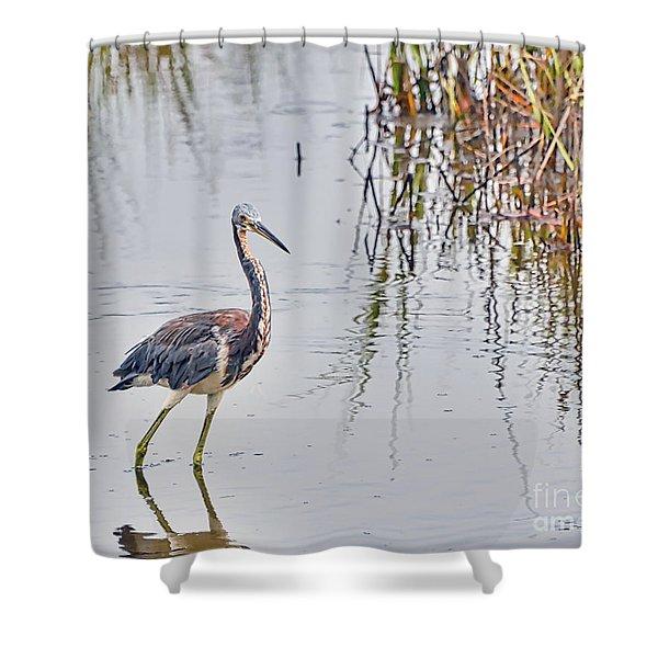 Wild Birds - Tricolored Heron Shower Curtain