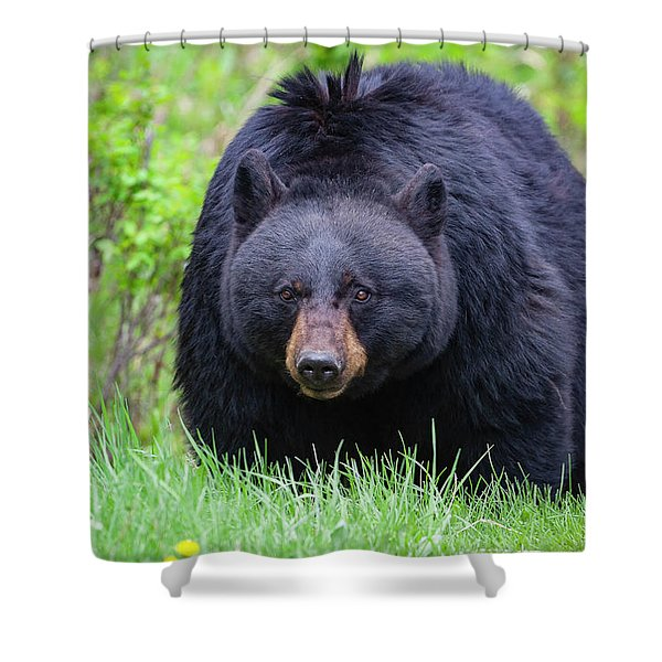 Wild Black Bear Shower Curtain