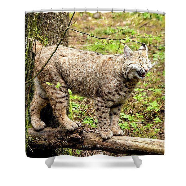 Wild Bobcat In Mountain Setting Shower Curtain