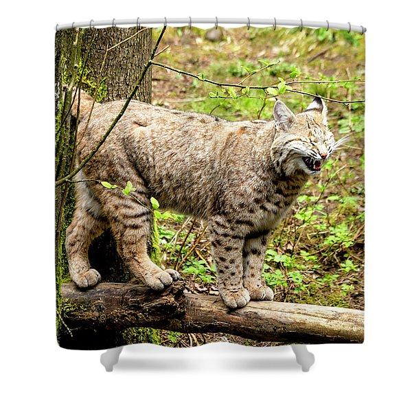 Wild Bobcat In Mountain Setting Shower Curtain