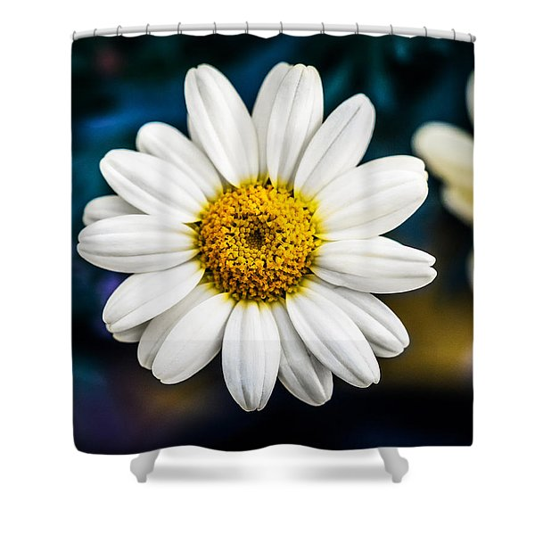 Shower Curtain featuring the photograph Wild Daisy by Nick Bywater