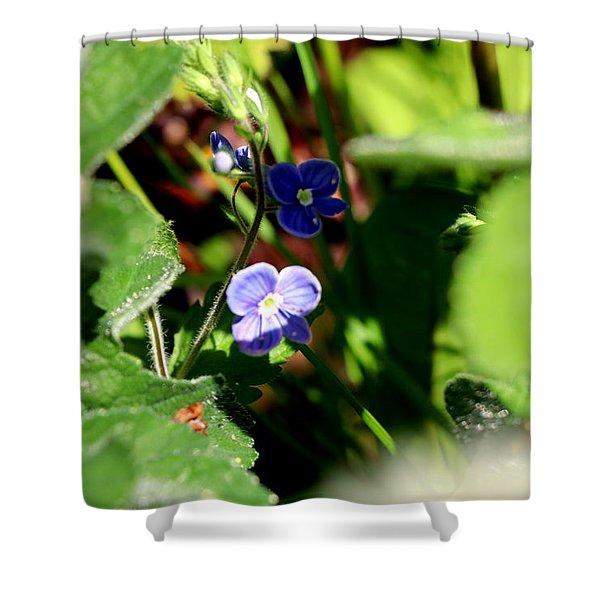 Wild Dayflower Shower Curtain
