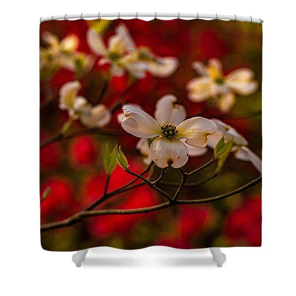 Wild Dogwood And Red Azaleas Shower Curtain