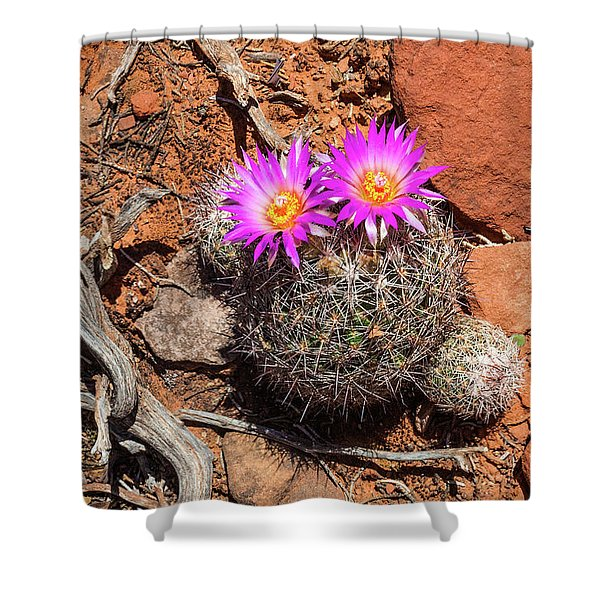 Wild Eyed Cactus Shower Curtain
