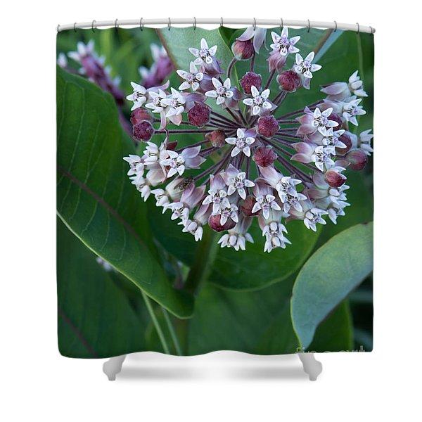 Wild Flower Star Burst Shower Curtain
