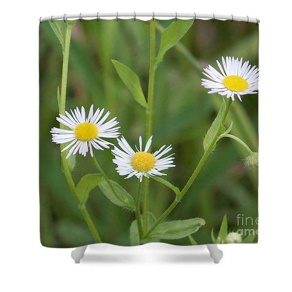 Wild Flower Sunny Side Up Shower Curtain