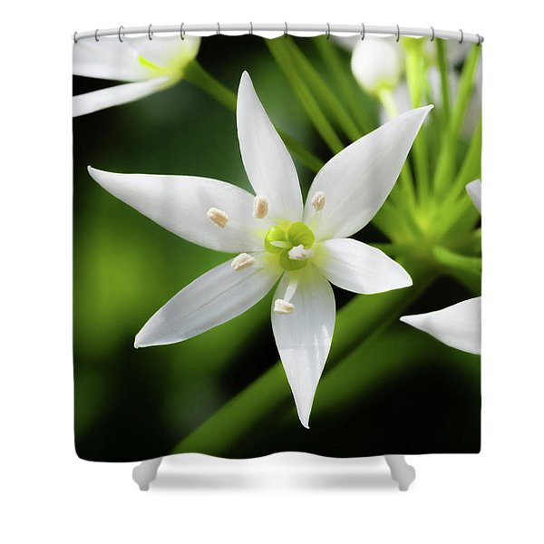 Shower Curtain featuring the photograph Wild Garlic Flower by Nick Bywater