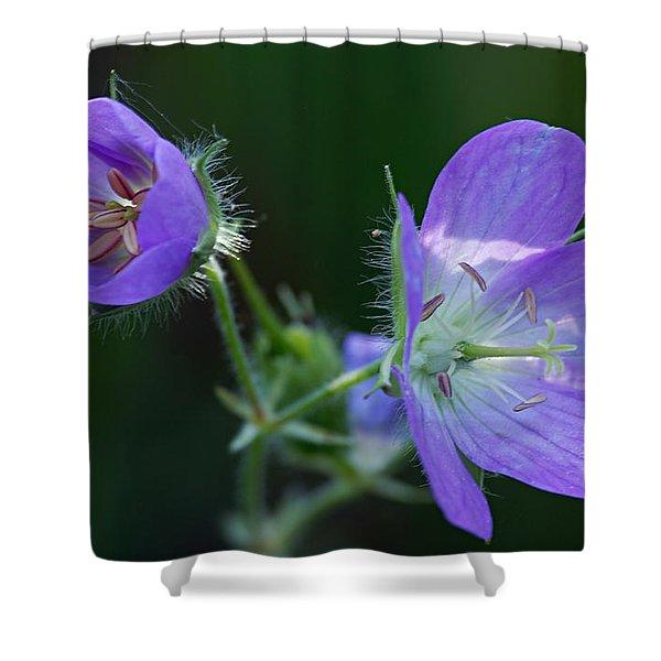 Wild Geraniums Shower Curtain