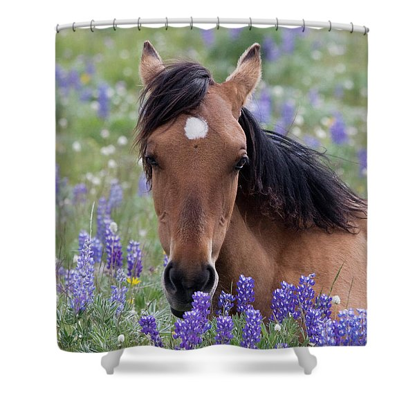 Wild Horse Among Lupines Shower Curtain