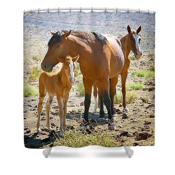 Wild Horse Family Shower Curtain