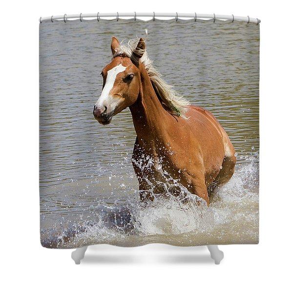 Wild Horse Splashing At The Water Hole Shower Curtain