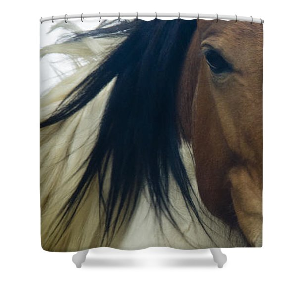 Shower Curtain featuring the photograph Wild Horses Of Nevada 1 by Catherine Sobredo