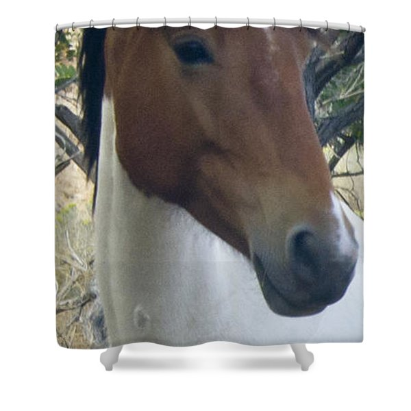 Shower Curtain featuring the photograph Wild Horses Of Nevada 2  by Catherine Sobredo