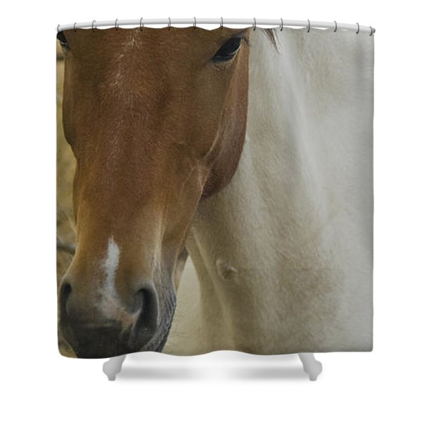 Shower Curtain featuring the photograph Wild Horses Of Nevada 3 by Catherine Sobredo