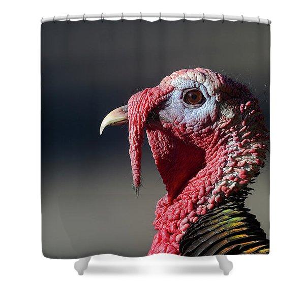 Wild Merriams Turkey Portrait  Shower Curtain