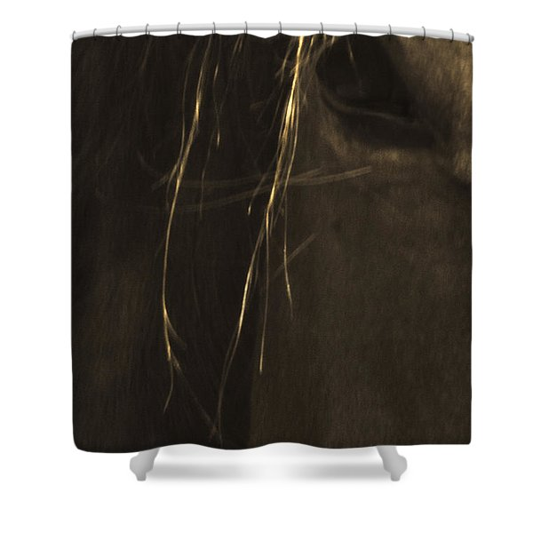 Wild Mustangs Of New Mexico 43 Shower Curtain