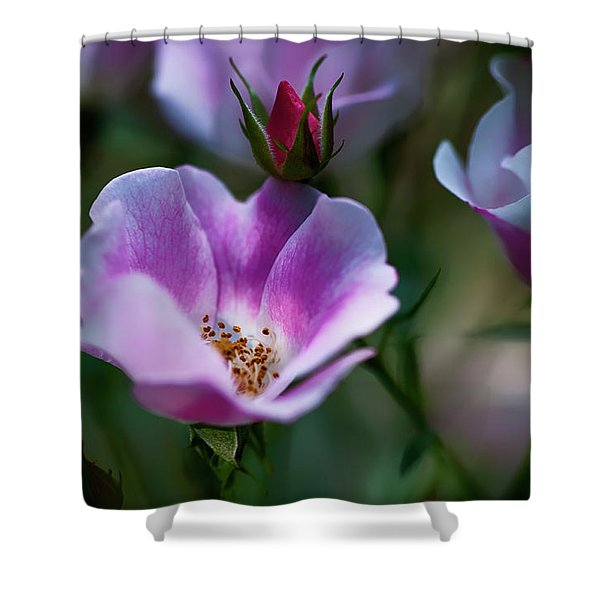 Wild Rose 7 Shower Curtain