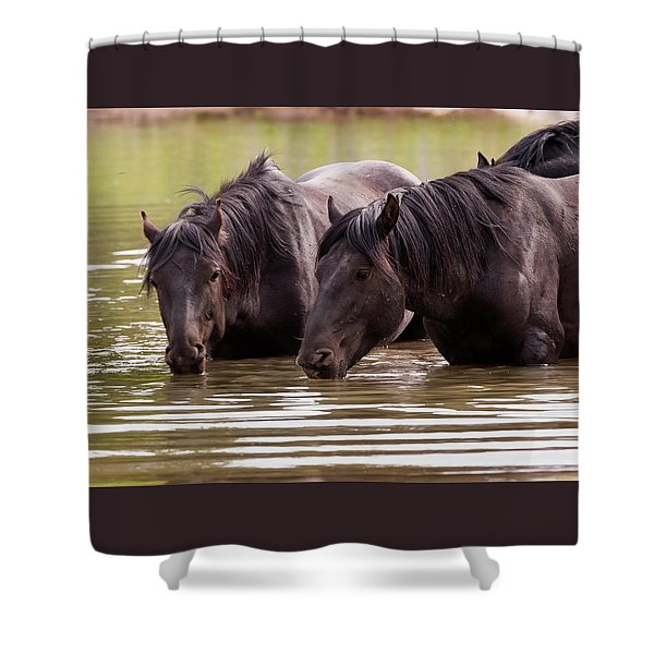 Wild Stallions At The Water Hole Shower Curtain