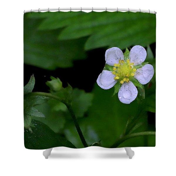 Wild Strawberry Blossom And Raindriops Shower Curtain