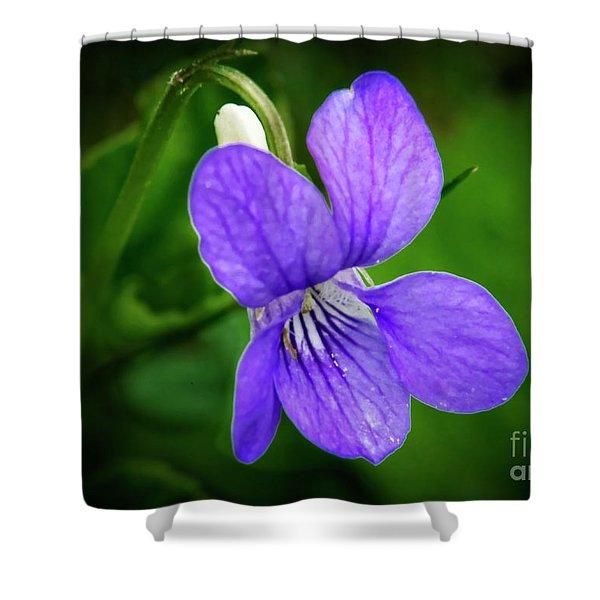 Wild Violet Flower Shower Curtain