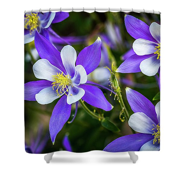 Wildflowers Blue Columbines Shower Curtain
