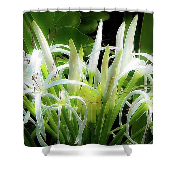 Wildflowers Of Hawaii Shower Curtain