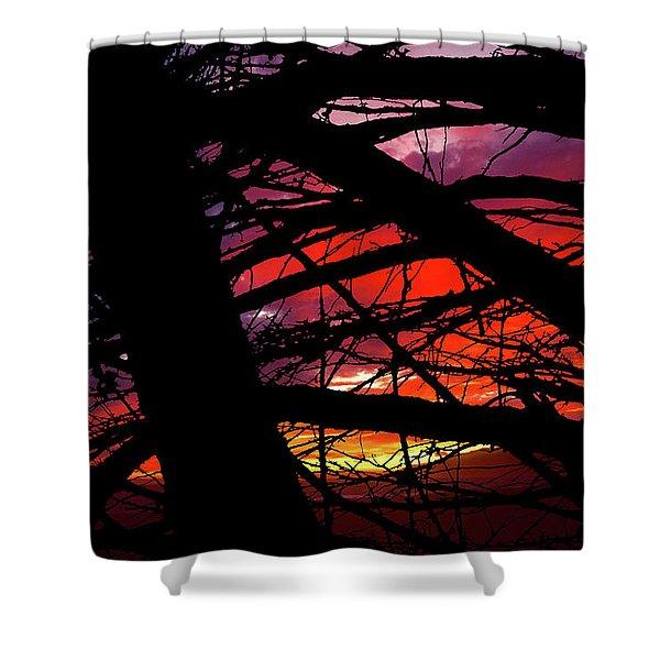 Wildlight Shower Curtain