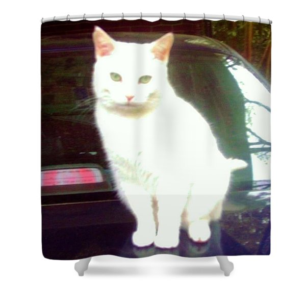 Will Wash Car For Treats Shower Curtain