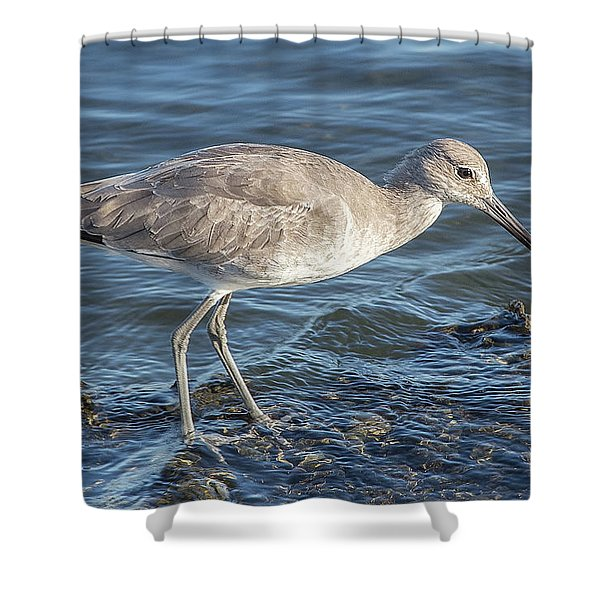 Willet In Winter Plumage Shower Curtain