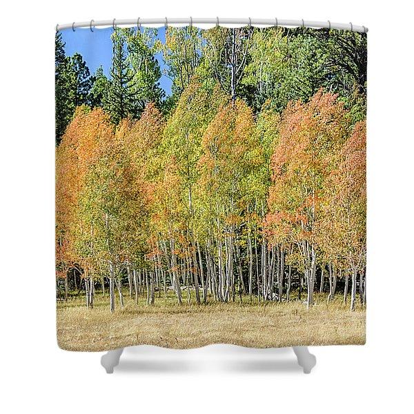 Windblown Aspen Shower Curtain