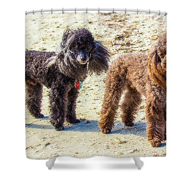 Windblown Beach Bums Shower Curtain